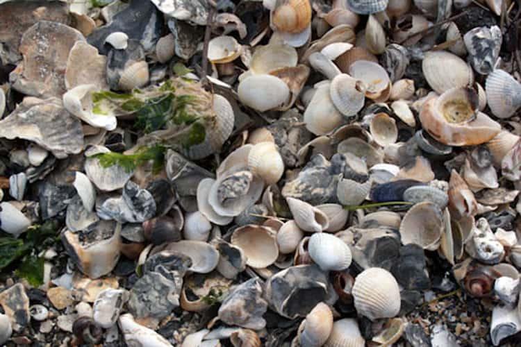 Brittany Shells