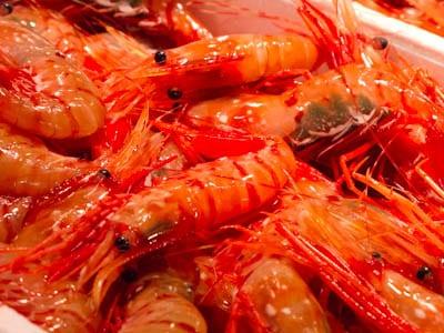 Tsukiji-fish-market-prawns