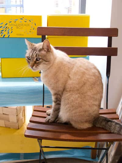 La-Belle-Illoise-Roscoff-Guard-Cat