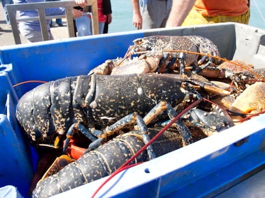 Lobster in Le Croisic
