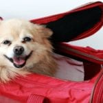 Travel Tip Thursday – Traveling With a Pet: What You Need to Know