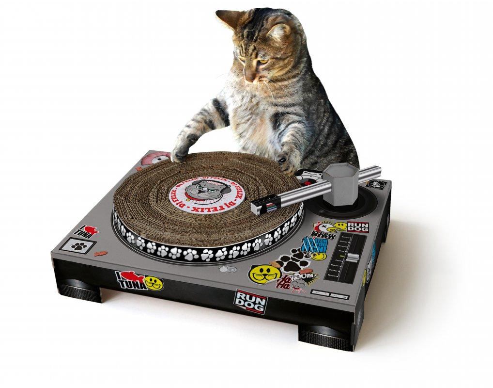 Cat scratch-with-cat