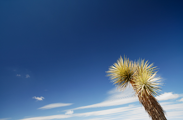 Blue skies in Joshua Tree