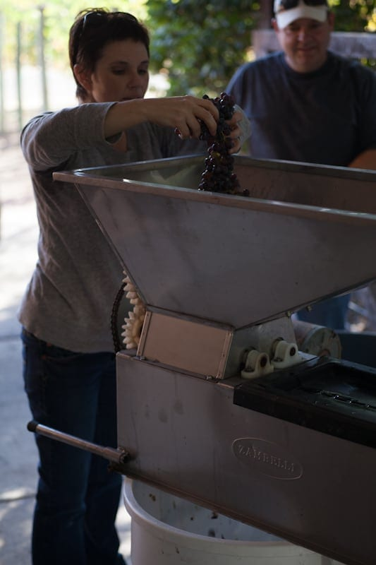 Adding grapes to the crusher