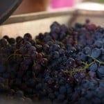 (Not quite) Wordless Wednesday #169: Wine Crush