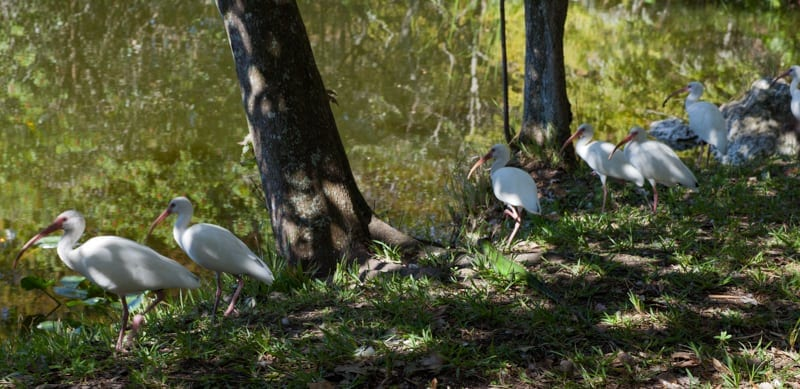 Flamingo Garden Birds