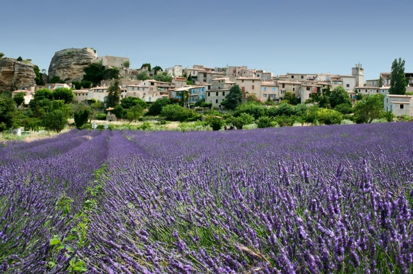 Lavender Field in Grasse in the South of France.