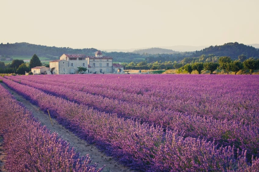 Villa in lavender fields in the South of France