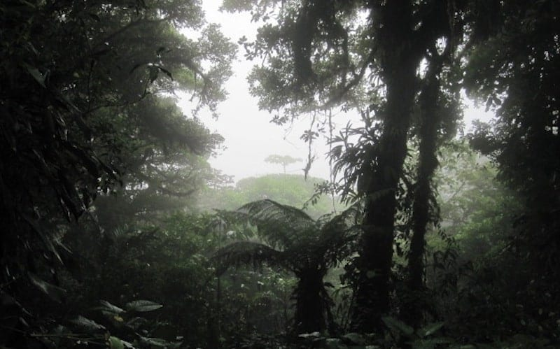 Traveler Tuesday – Abby Tegnelia of The Neon Jungle Princess Cloud Forest Costa Rica
