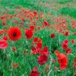 Capture the Colour 2013 – A Journey Through Travel Photos