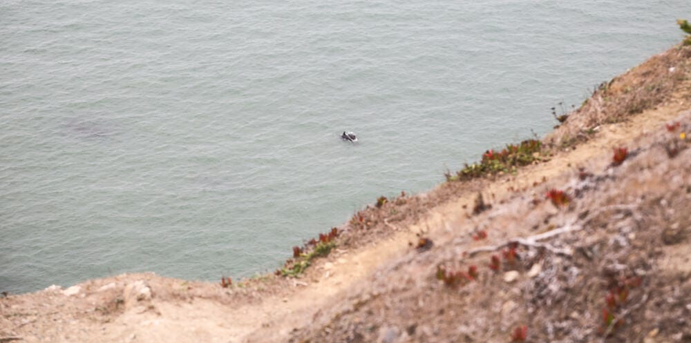 Coastal-Trail-Dolphins2