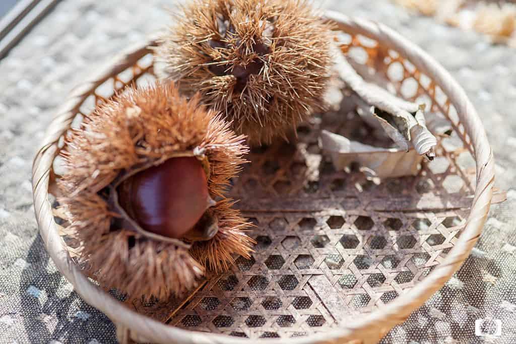 Chestnuts in Kyoto Nishiki Market