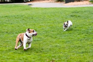Dogs in St. Mary's Park in San Francisco
