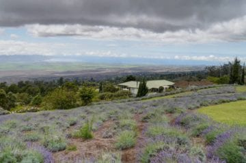 Scenes-from-the-Kula-Lavender-Farm-NW-Look-by-John-Morgan