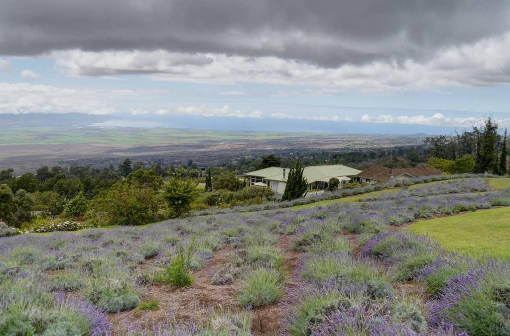 Scenes-from-the-Kula-Lavender-Farm-NW-Look-by-John-Morgan