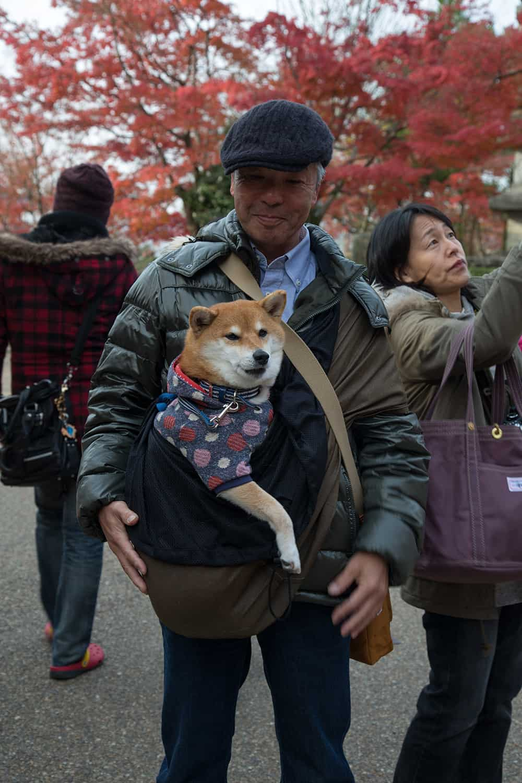 Kiyomizu-dera Temple Dog