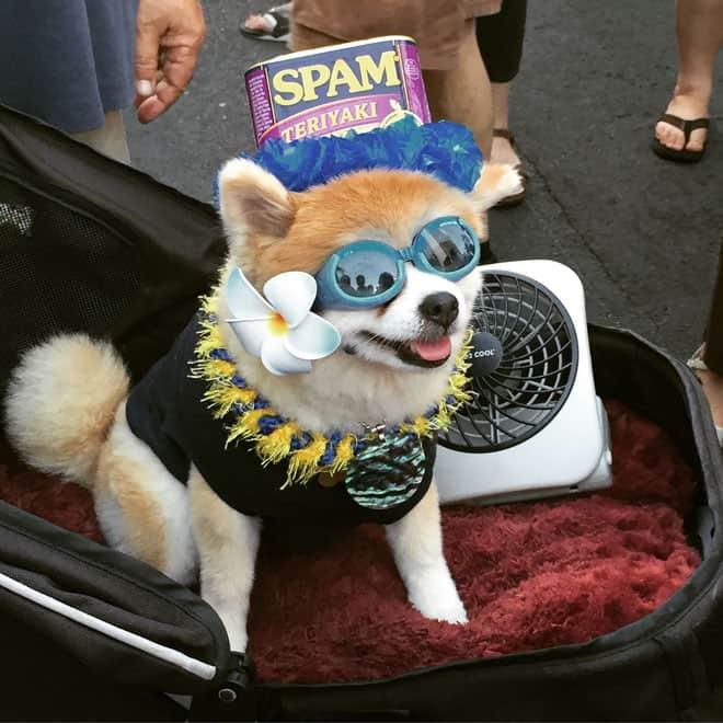 SPAMJam-Dog
