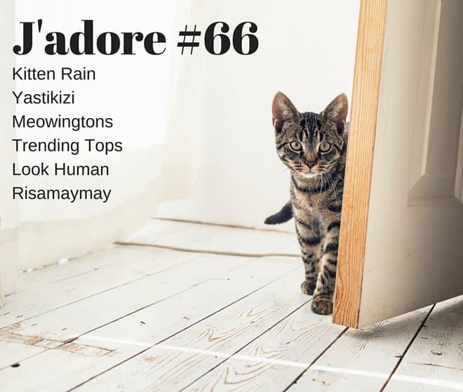 J'adore #66