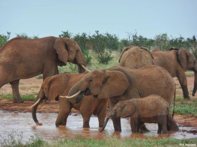 Traveler-Tuesday-Katie-McLeod-Elephants-in-Tsavo-East-Kenya