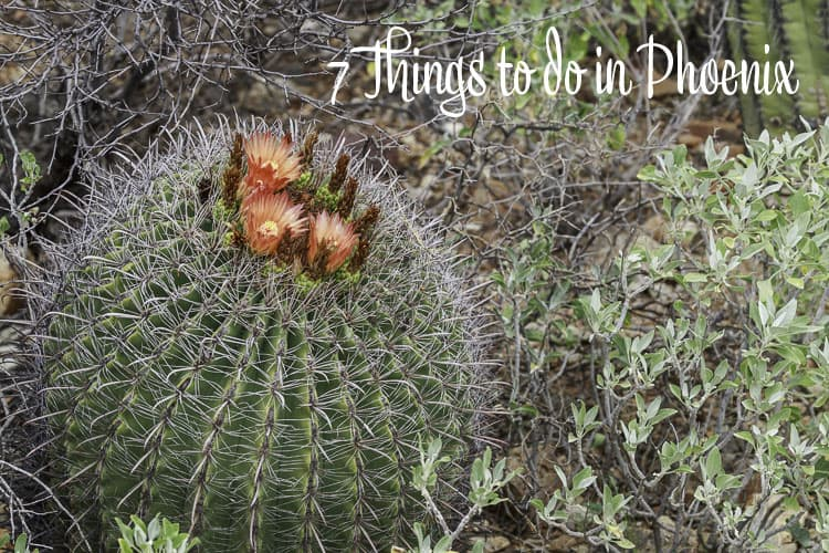 7 Things to do in Phoenix