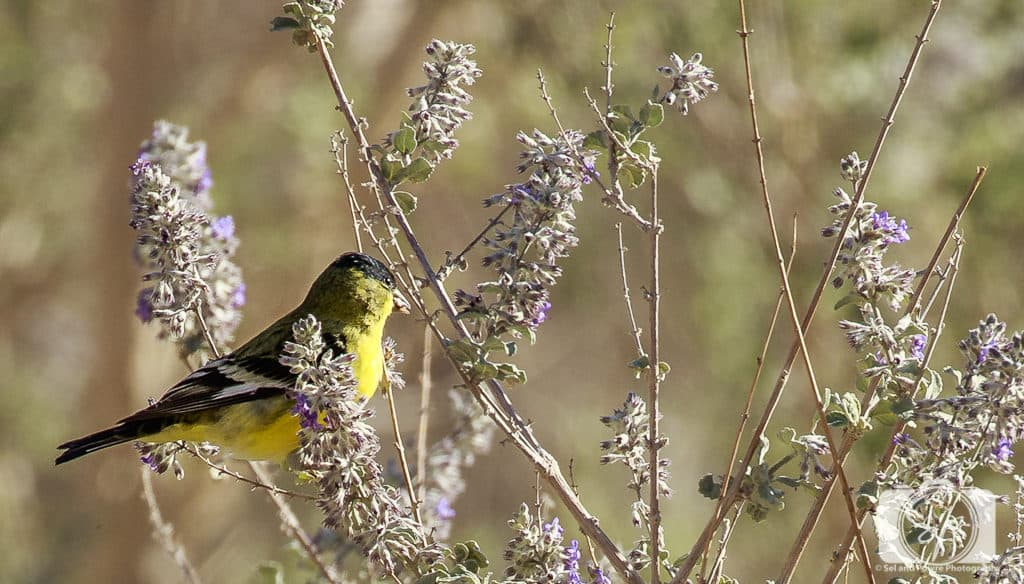 Birdwatching in Borrego Spring California