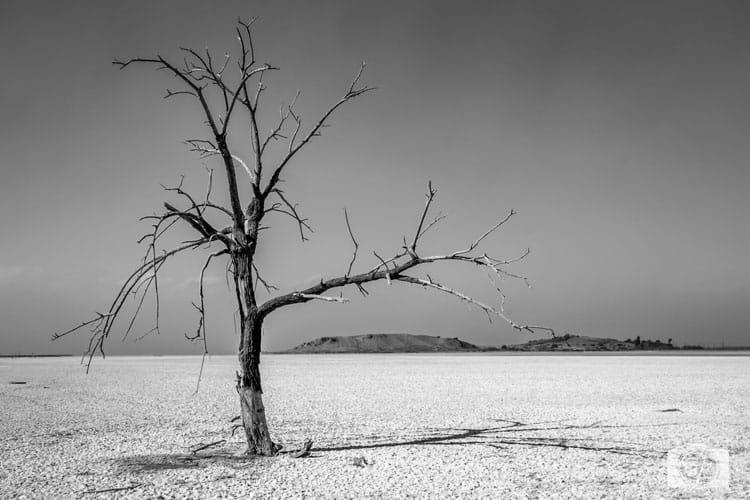Sonny-Bono-Refuge-Salton-Sea