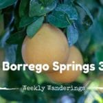 Weekly Wanderings #3 – Borrego Springs