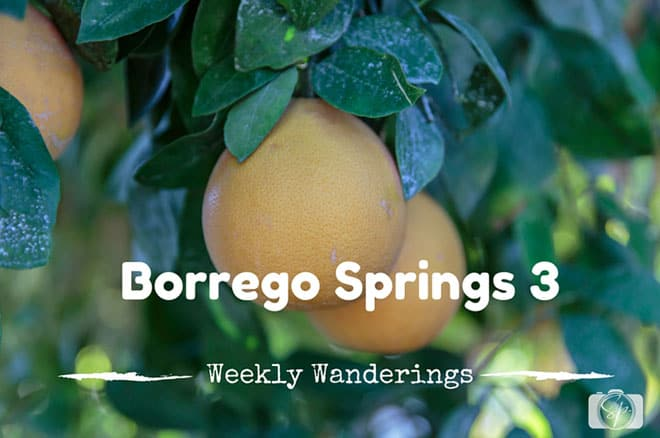 Weekly-Wanderings-Borrego-Springs-3