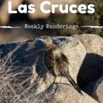 Weekly-Wanderings-Las Cruces