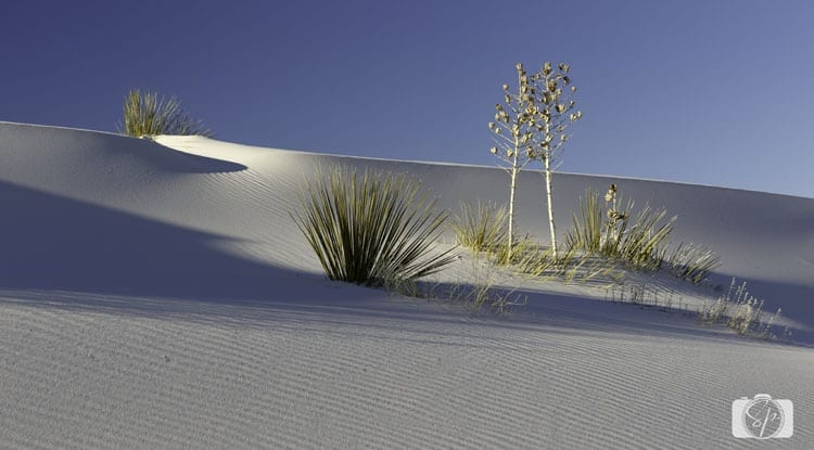 White-Sands-Monument-NEW-MEXICO
