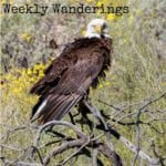 Weekly-Wanderings-Arizona
