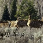 Weekly-Wanderings-Grand-Teton