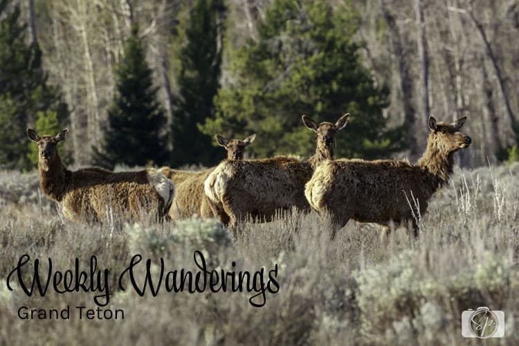 Weekly Wanderings Grand Teton