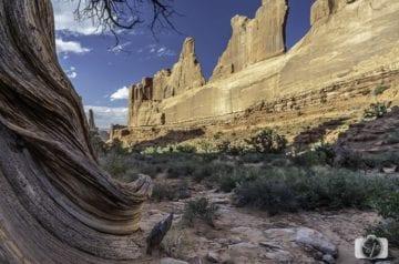 arches national park park avenue
