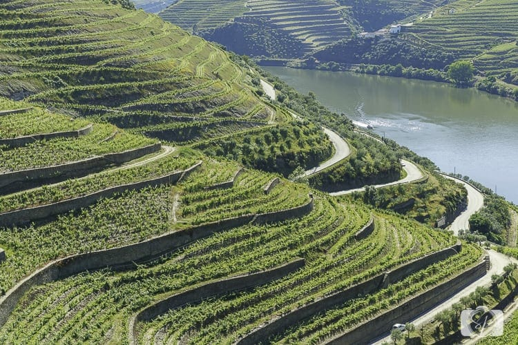 Viking River Cruises Portugal - Douro River Vines