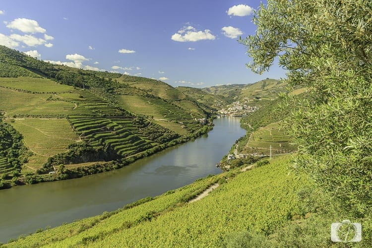Viking River Cruises Portugal - Driving to Sandeman Estate on the Douro River