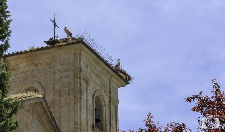 Viking River Cruises Portugal - Storks in Salamanca