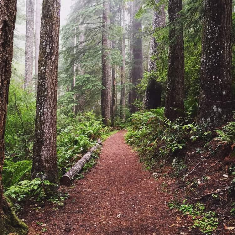 Oregon Redwood Trail