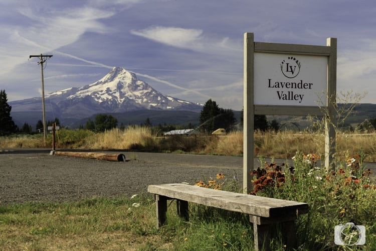 lavander valley farm mt hood