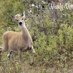 Weekly Wanderings #33 – Missoula
