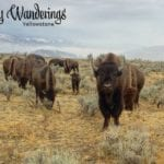 Weekly Wanderings #35 – Yellowstone