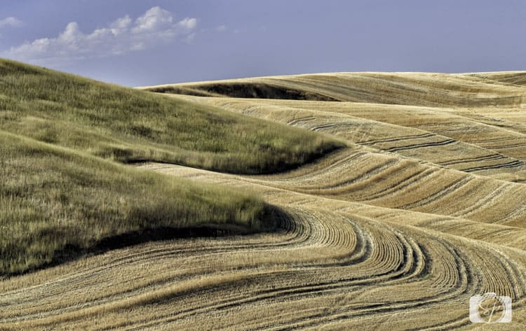 palouse harvested field
