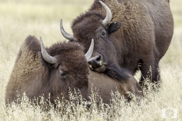 things to do on the way to glacier national park national bison range