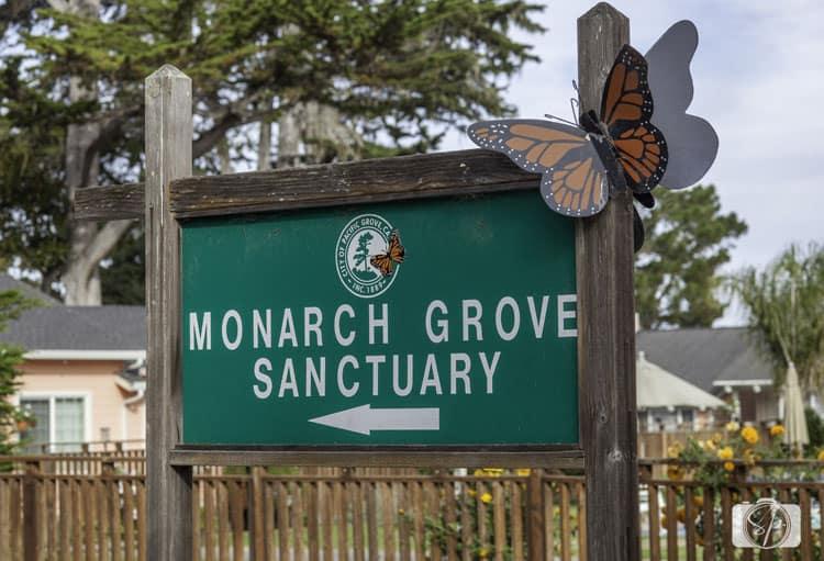 monterey-county-monterey-monarch-grove-sanctuary