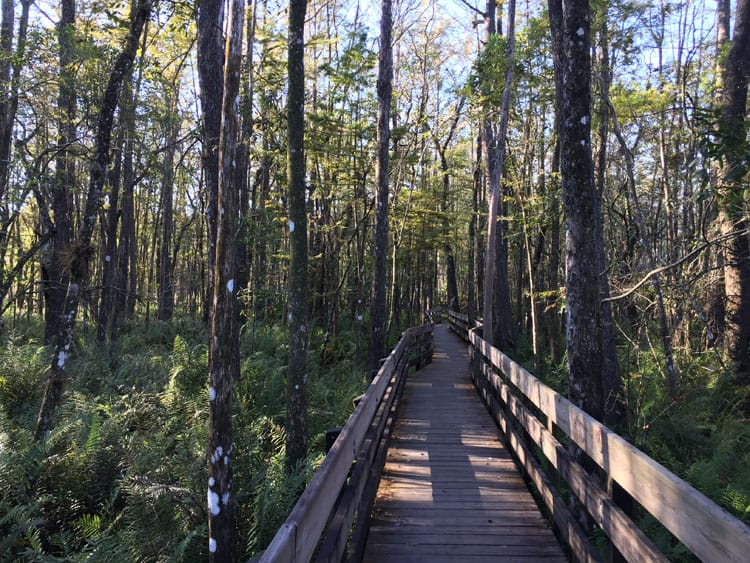 boardwalk-six-mile-cypress-slough-preserve