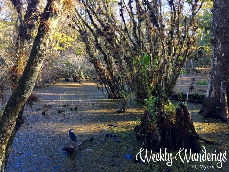 weekly-wanderings-ft-myers
