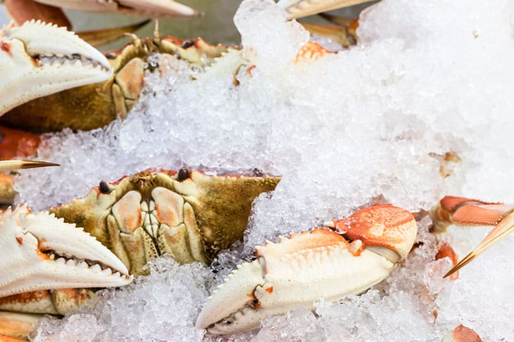San Francisco for the Holidays -Dungeness crab
