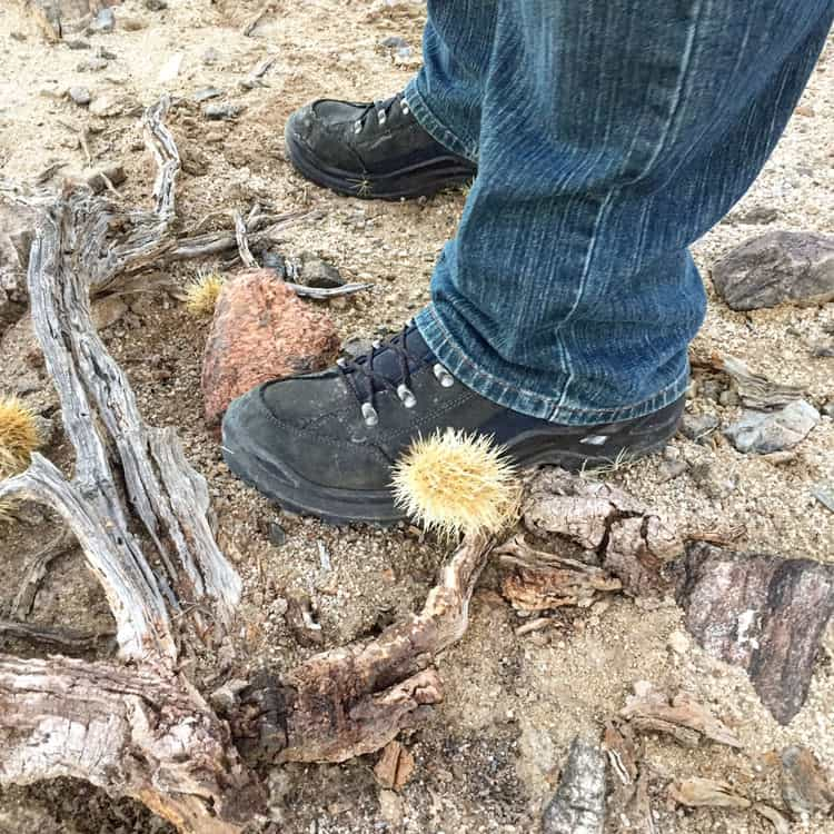 Cactus on Boots