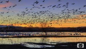 new mexico bosque del apache birds sunrise-1