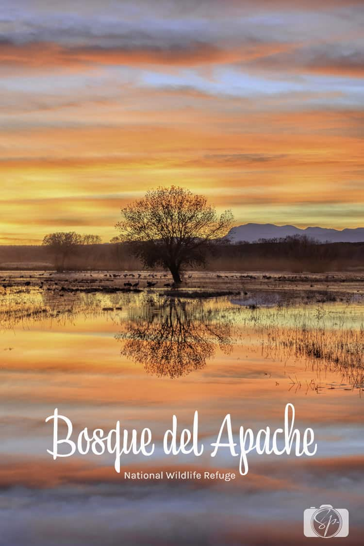 new mexico bosque del apache tree at sunset
